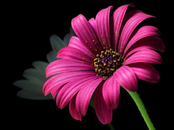 お花、癒し、フラワーセラピー